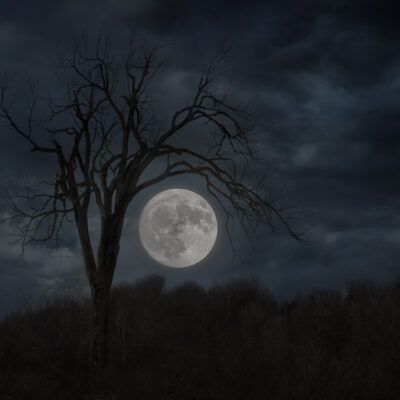"""Companions of the Night 36""""x24"""" Photograph printed on metallic paper and high gloss lamination"""