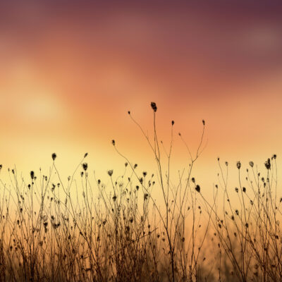 """Field of Colors 30""""x17 Photograph - 1.5"""" canvas"""